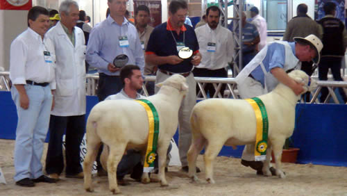 Tattykeel Champion and Reserve Champion - Fienco Show Brazil