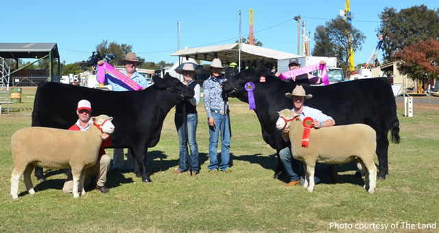 2018 Dubbo Show Supreme Exhibits in Both Cattle and Sheep