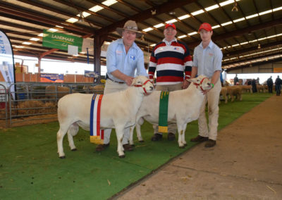 Champion and Reserve Champion Rams NSW Sheep Show 2017