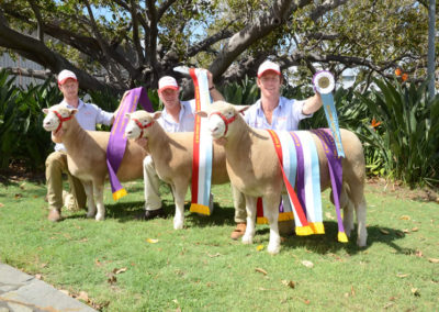 2018 Sydney Royal Supreme Prime Lamb Exhibit, Ram & Dam, Peter Taylor Trohy and JA & MY Gilmore Trophy