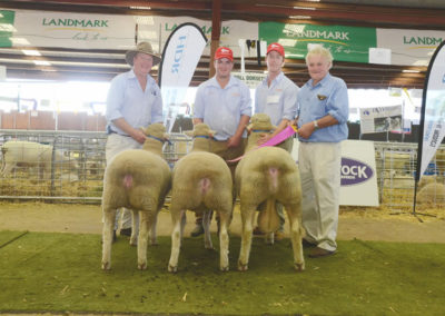 Supreme Group NSW Sheep Show 2016