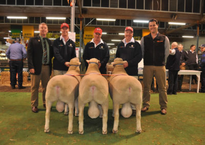 Supreme Group of three rams Adelaide Royal 2015