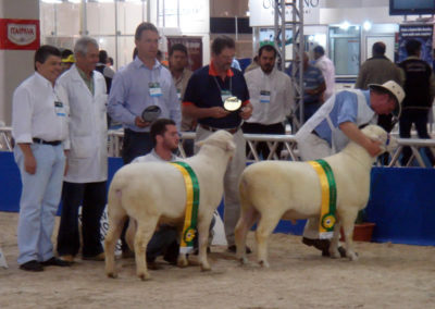 Tattykeel Champion and Reserve Champion Feinco Show Brazil