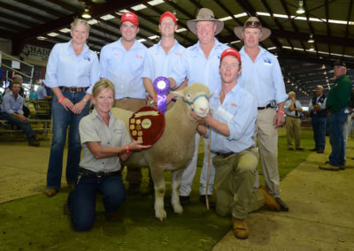 Jackpot 150206 Supreme Exhibit NSW Sheep Show 2016