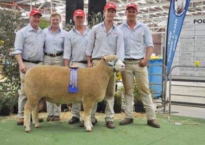 2014 Avustralya- Asya Dorset Koyun Yarışması. 202-13 no'lu damızlık Koç. Göz Kası Alanı: 56.55 cm2. 21.9.2014 tarihine kadarki en skorer hayvan.
